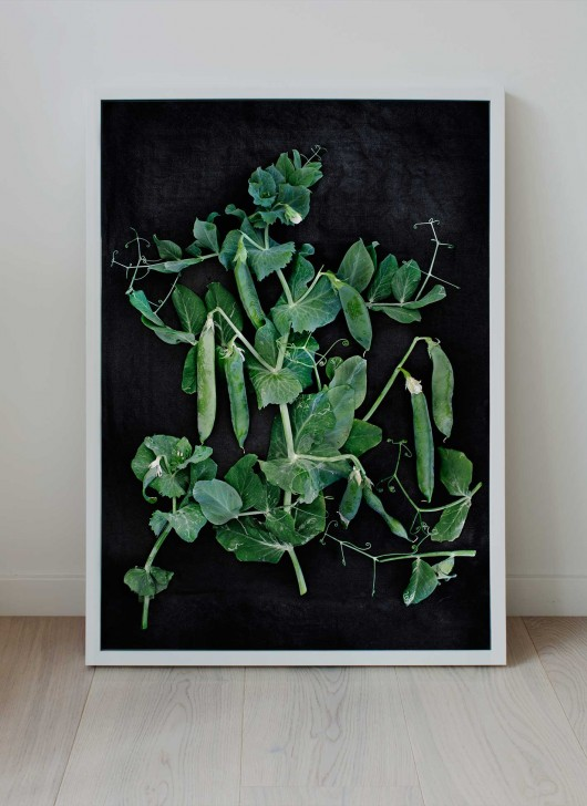 Print of homegrown green peas by food photographer Ulrika Ekblom.