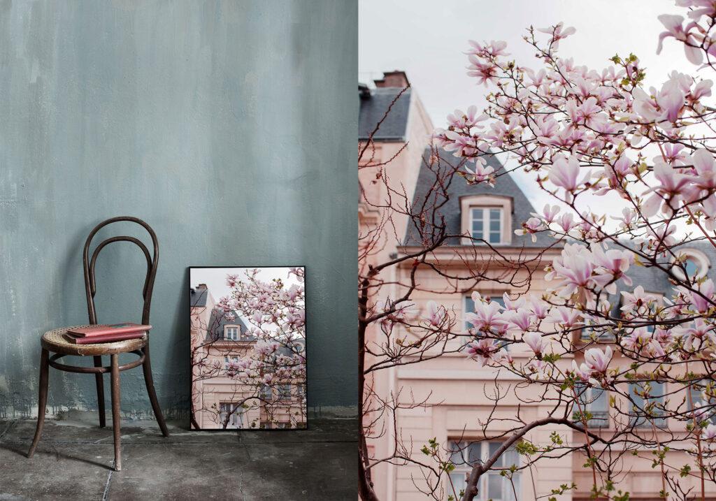 Pink magnolia and pink building in Paris photography print. Ulrika Ekblom Photography
