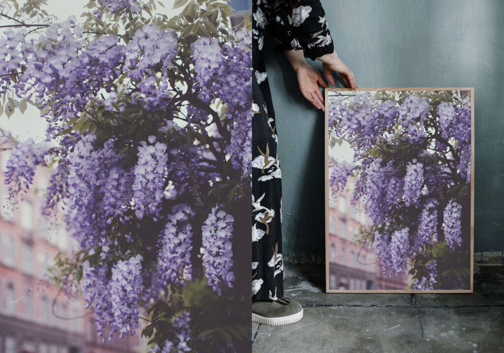 Wisteria photography print. Ulrika Ekblom Photography.